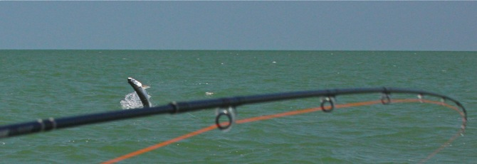 another tarpon headed up