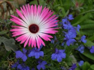 AK Floral