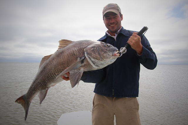 black drum caught with Spotted Tail Outdoors