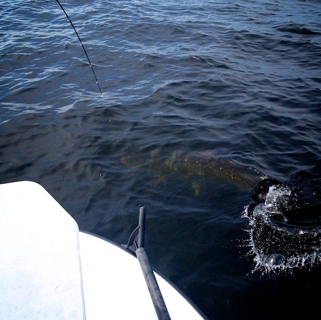 Capt Andy Parker tarpon fishing